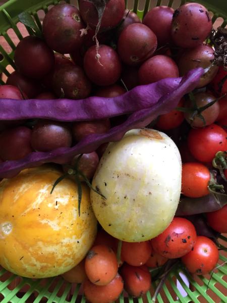 August Harvest-julieengelhardt