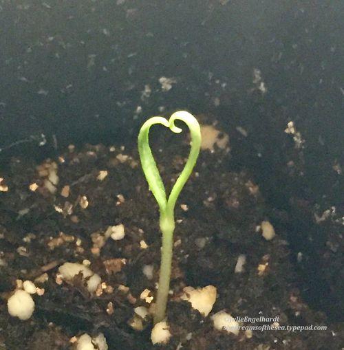 Heart 1-julieengelhardt